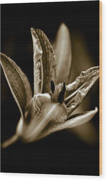 Daylily Wood Print by Frank Tschakert