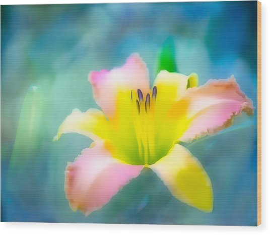 Daylily In Blue Wood Print