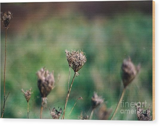 Dead Flower Wood Print by Simonne Mina