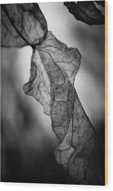 Fragile Leaf Bw Wood Print