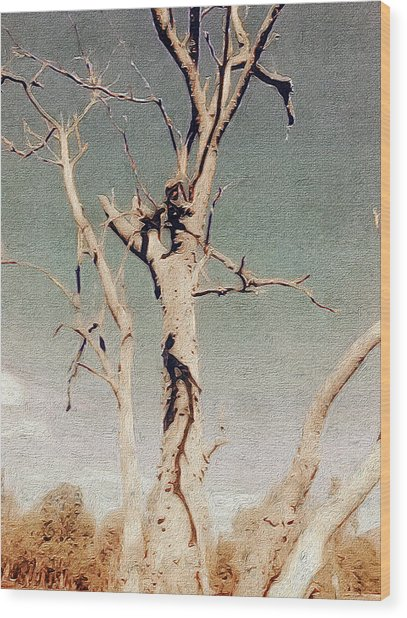 Dead Tree, Outback. Wood Print