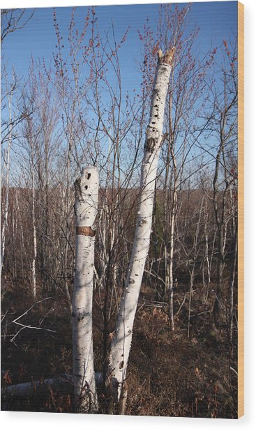 Dead Tree Wood Print by Richard Mitchell