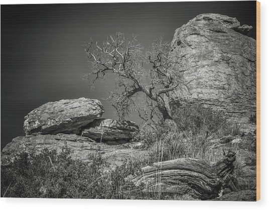 Dead Tree With Boulders Wood Print by Joseph Smith