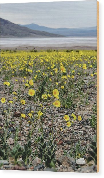 Death Valley Super Bloom Wood Print