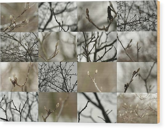 December Buds Wood Print