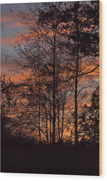 December Sunset In Frog Pond Woods Wood Print by Maria Suhr