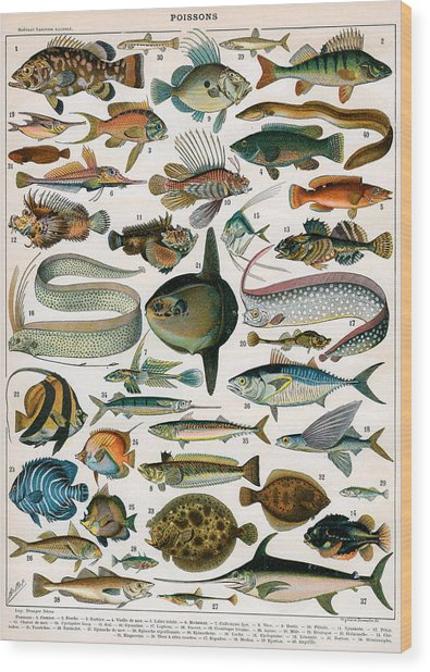Decorative Print Of Poissons By Demoulin Wood Print