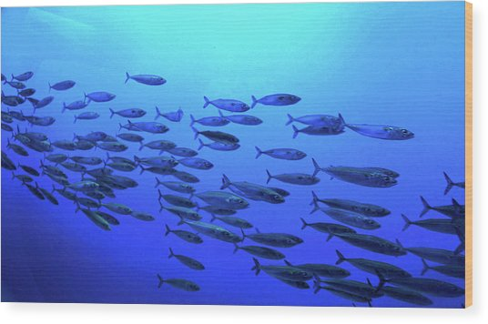 Wood Print featuring the photograph Deep Blue by Pacific Northwest Imagery
