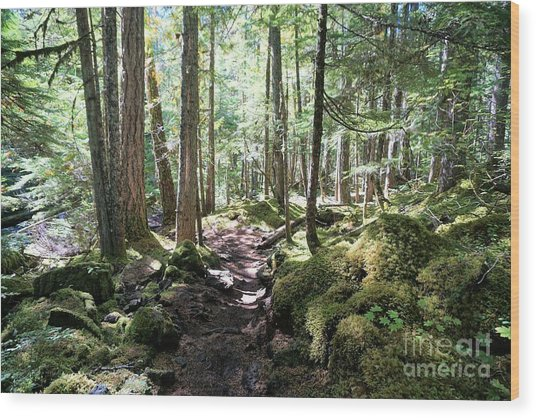 Deep In The Oregon Forest Wood Print