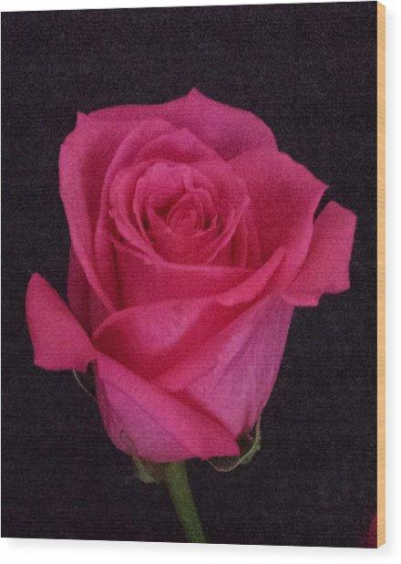 Deep Pink Rose On Black Wood Print