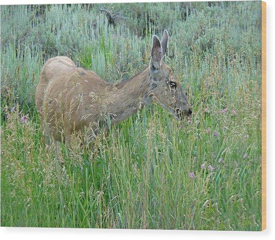 Deer 1 Wood Print