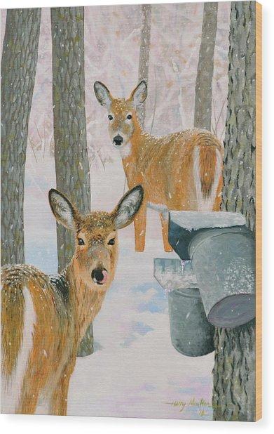 Deer And Sap Buckets Wood Print