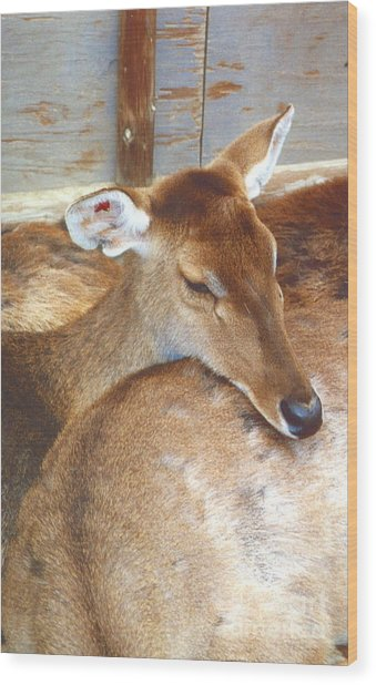 Deer Wood Print by Andrea Simon