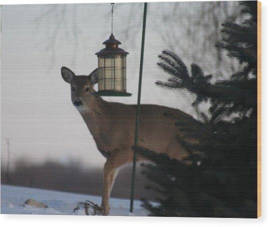 Deer At A Bird Feeder Wood Print by Magi Yarbrough