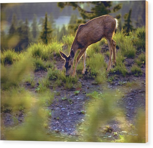 Deer At Crater Lake, Oregon Wood Print
