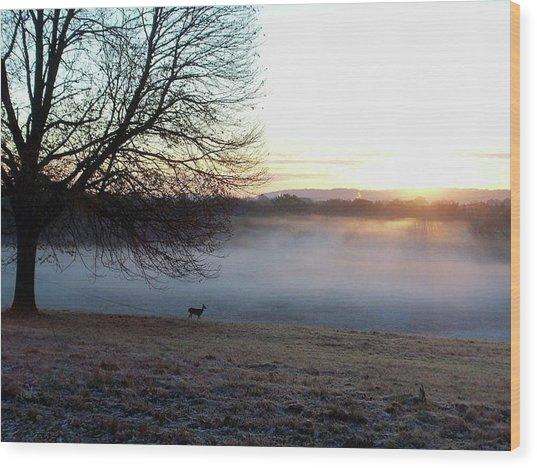 Deer At Dawn Wood Print