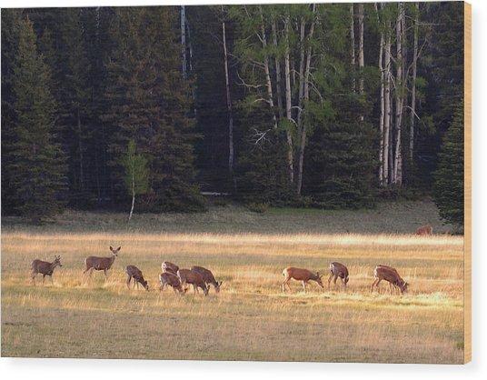 Deer At Kaibab Meadows Wood Print by Neil Doren