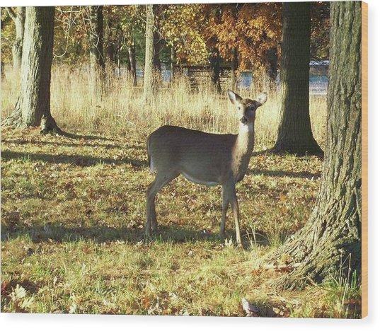 Deer At Valley Forge Wood Print