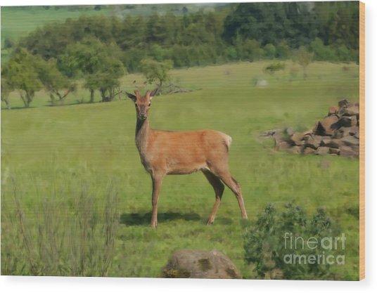 Deer Calf. Wood Print
