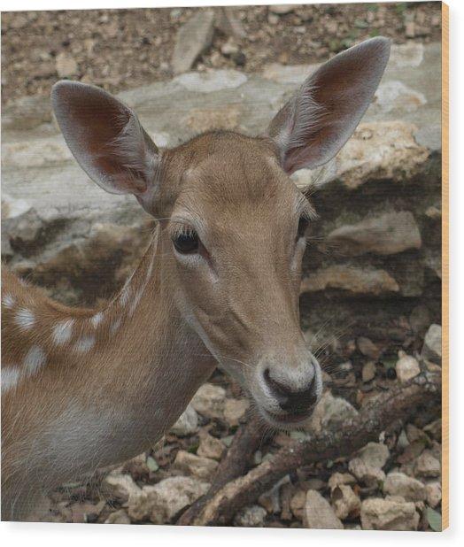 Deer Wood Print by Dennis Stein