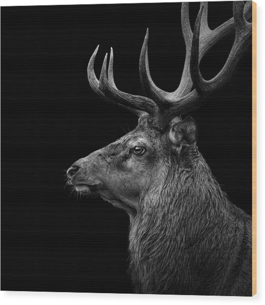 Deer In Black And White Wood Print