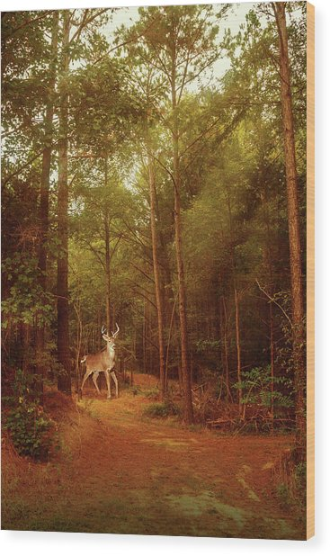 Wood Print featuring the photograph Deer In Morning Light by Barry Jones