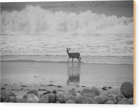 Deer In Ocean Black And White Wood Print