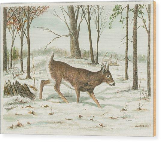 Deer In Snow Wood Print by Samuel Showman