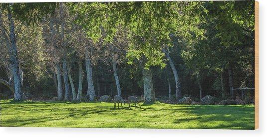 Deer In The Afternoon Sun Wood Print