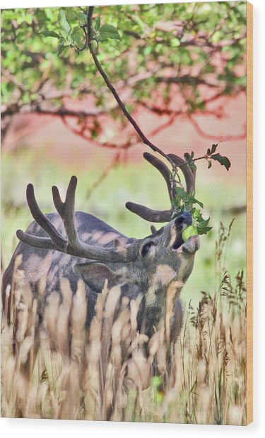 Wood Print featuring the photograph Deer In The Orchard by Wesley Aston