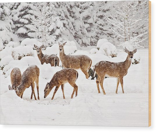 Wood Print featuring the photograph Deer In The Snow 2 by Angel Cher