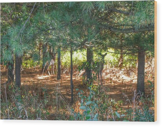 1011 - Deer Of Croswell I Wood Print