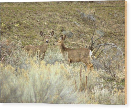 Deer Wood Print by Scott Gould