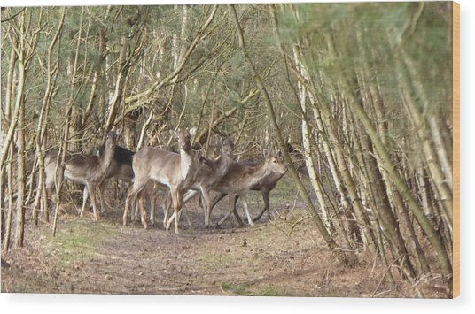 Deer Walking Across Forest Path Wood Print by Richard Griffin