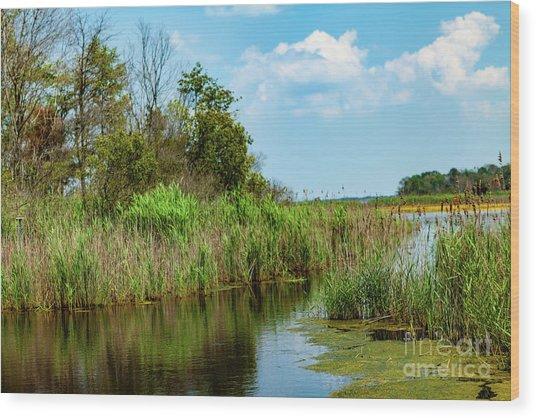 Delaware Wetlands Wood Print