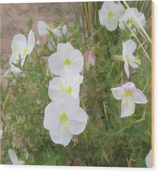 Delicate Desert Bloom - Death Valley Wood Print