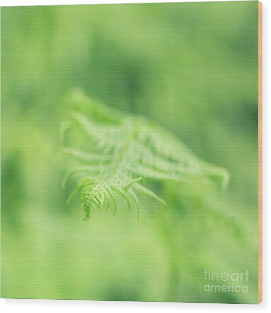 Delicate Fern - Hipster Photo Square Wood Print