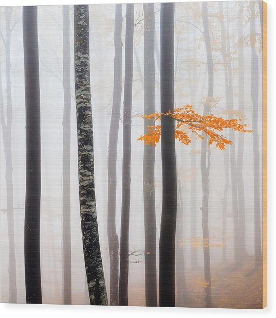 Delicate Forest Wood Print