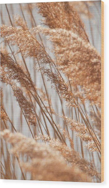 Delicate Grasses In Spring Wood Print