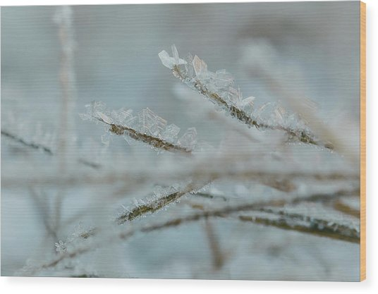 Delicate Morning Frost  Wood Print