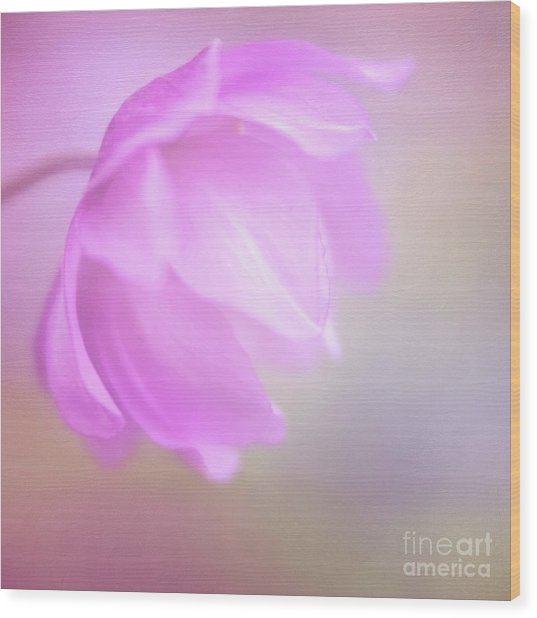 Delicate Pink Anemone Wood Print