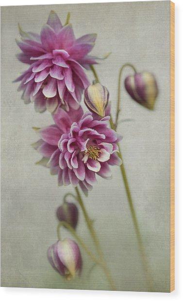 Delicate Pink Columbine Wood Print