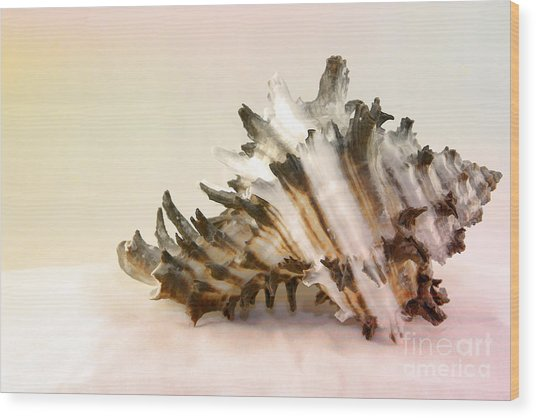 Delicate Shell Wood Print