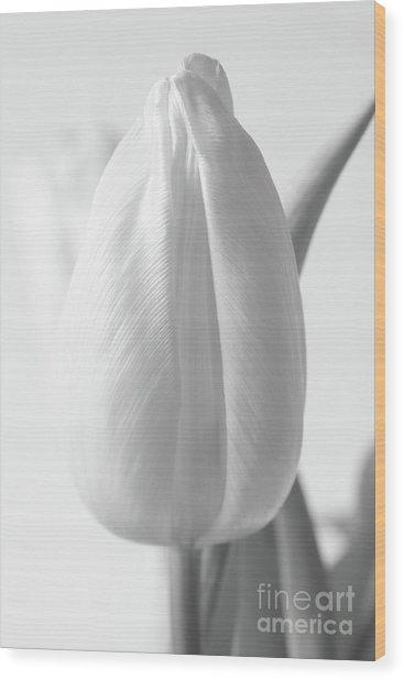 Delicate Tulip Wood Print