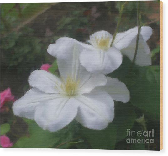 Delicate White Clematis Pair Wood Print