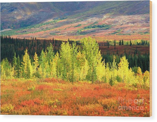 Denali Autumn Tundra Wood Print