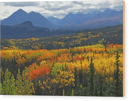 Denali National Park Greeting Wood Print