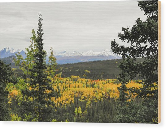 Denali National Park Landscape Wood Print