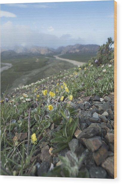 Denali Wildflowers Wood Print