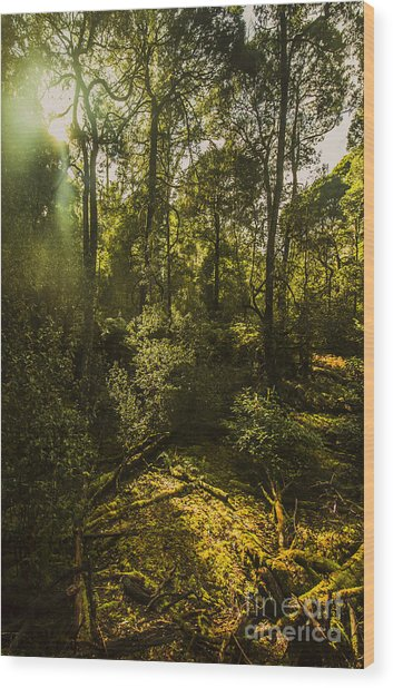 Dense Green Tropical Forest Wood Print